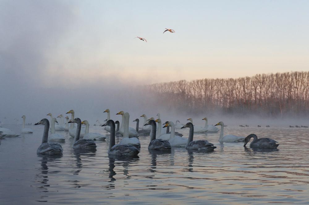 Swan Lake 15