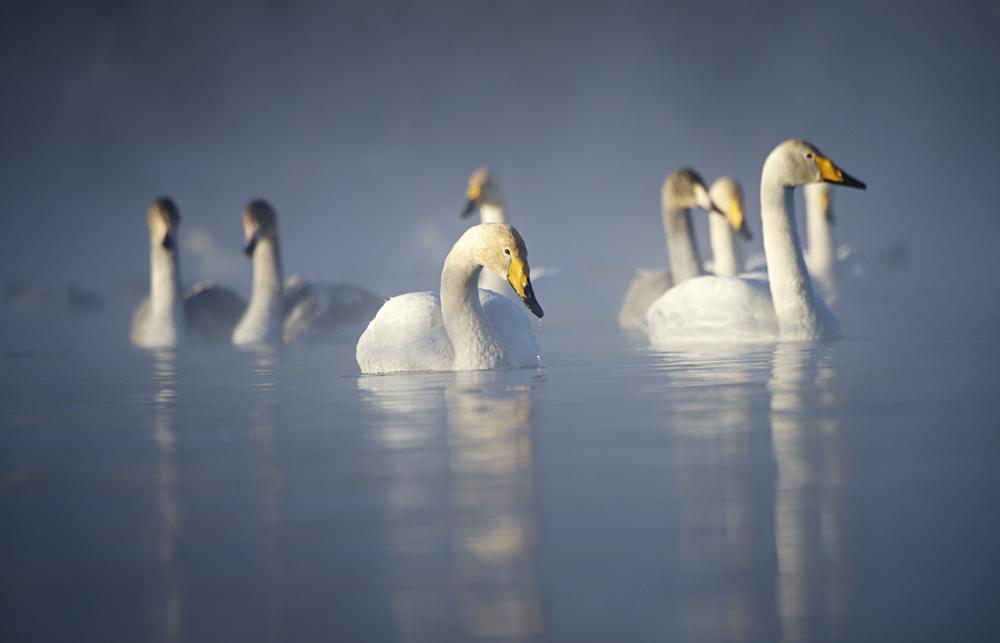 Swan Lake 18