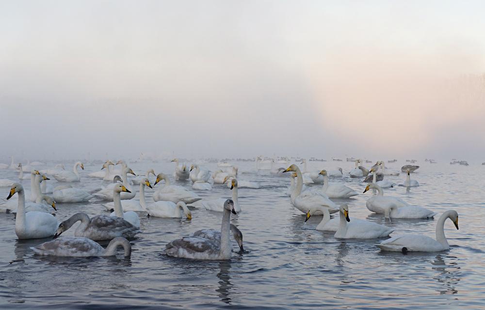 Swan Lake 19