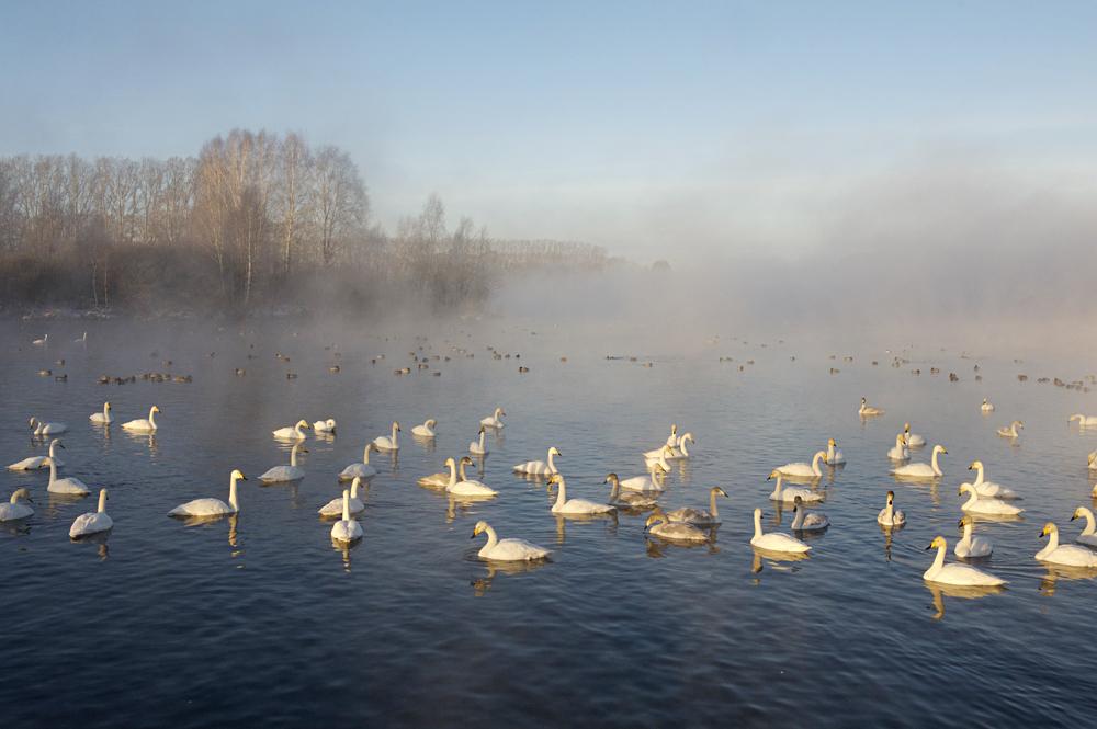 Swan Lake 21