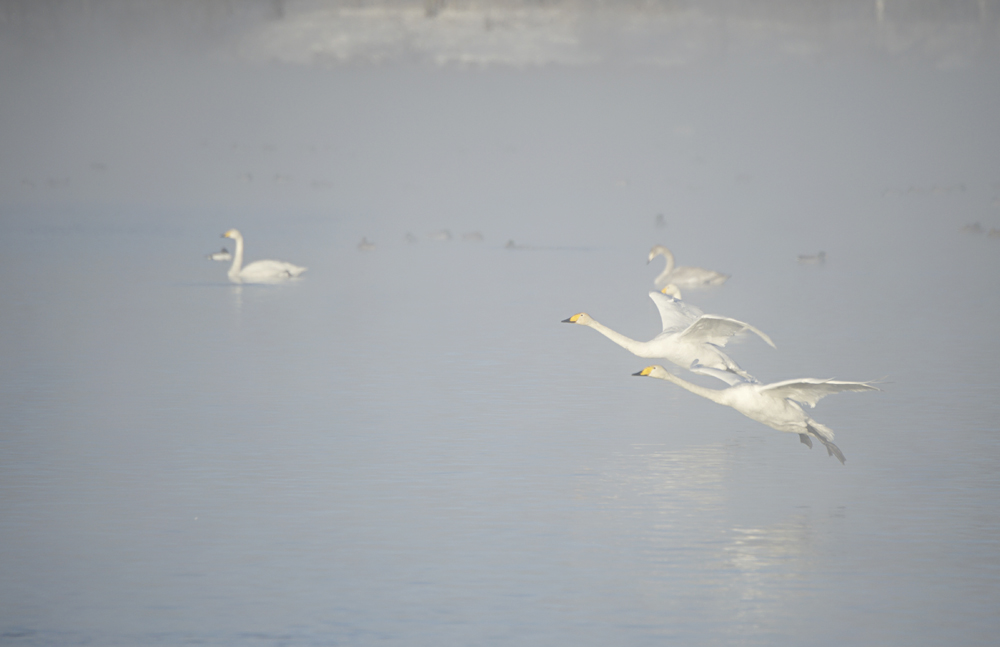 Swan Lake 23