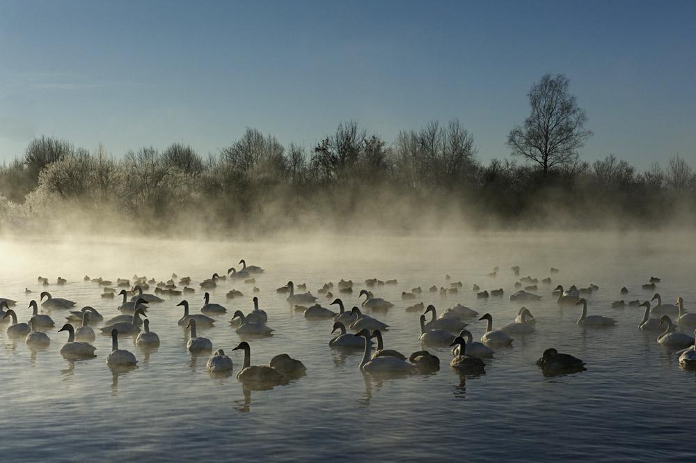 Swan Lake 27