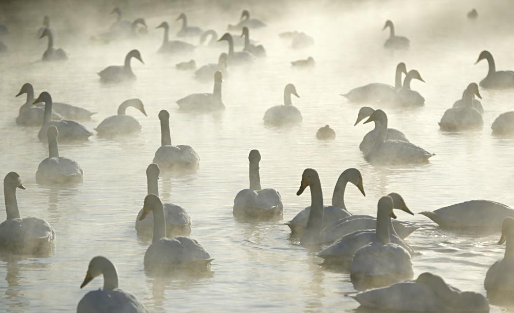 Swan Lake 29