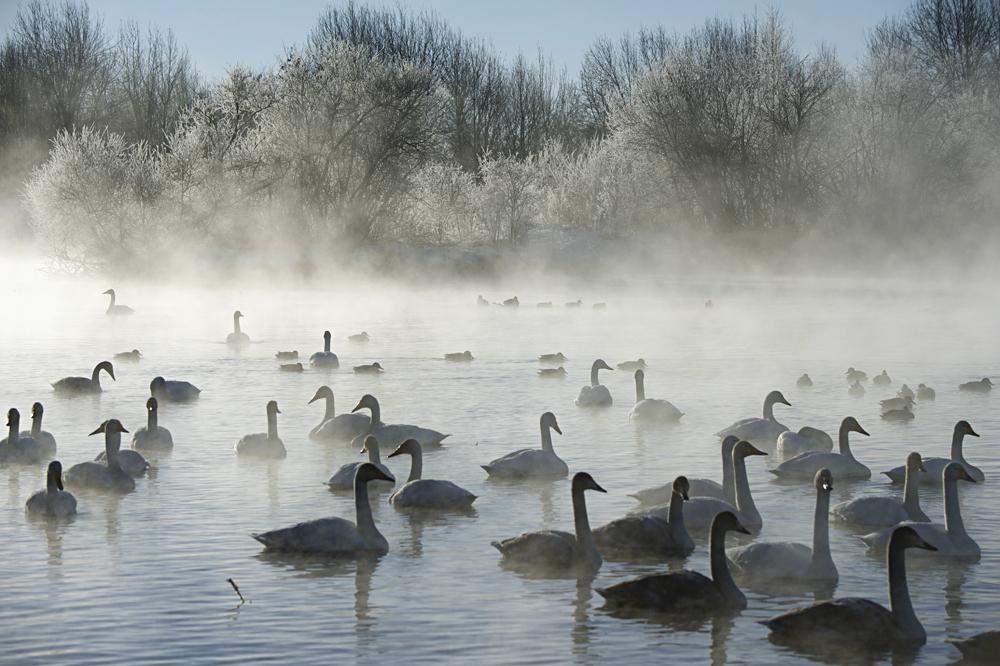 Swan Lake 30