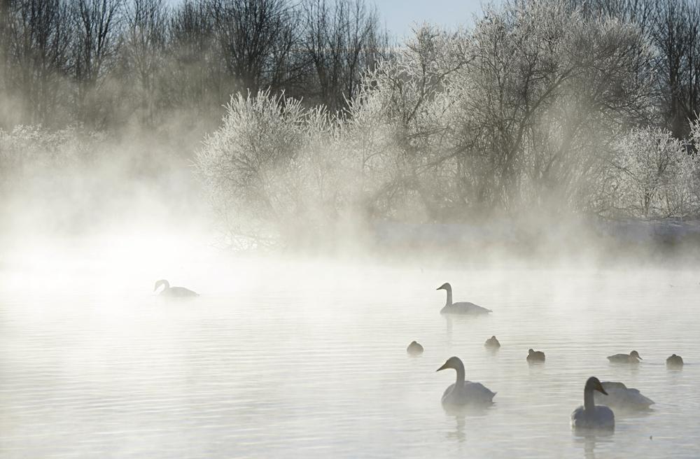 Swan Lake 31