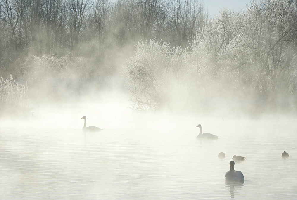 Swan Lake 32