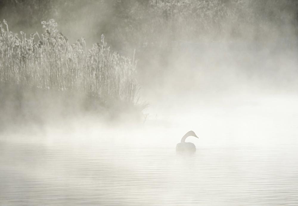 Swan Lake 33