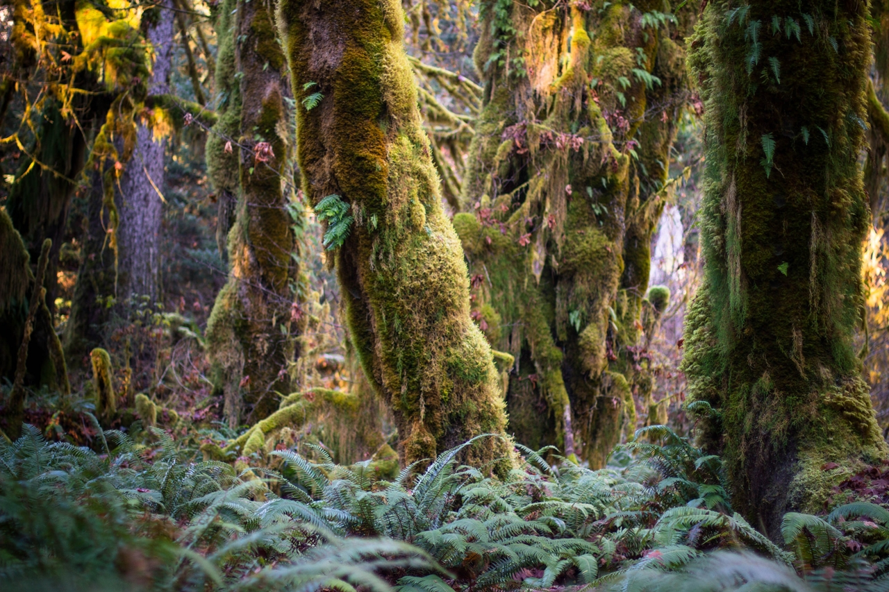 The Hall of Mosses 01
