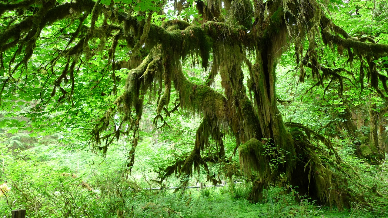 The Hall of Mosses 02