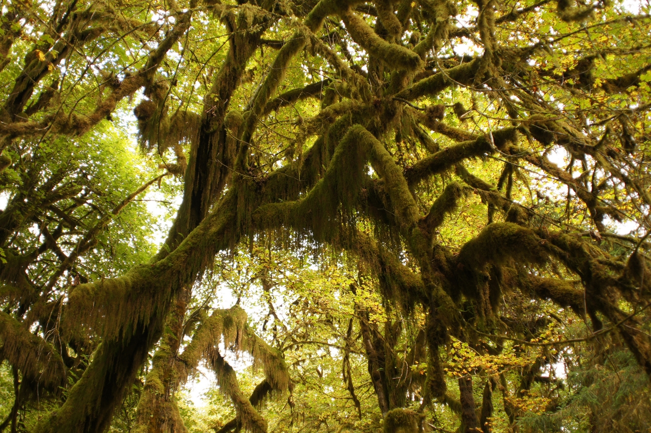 The Hall of Mosses 03