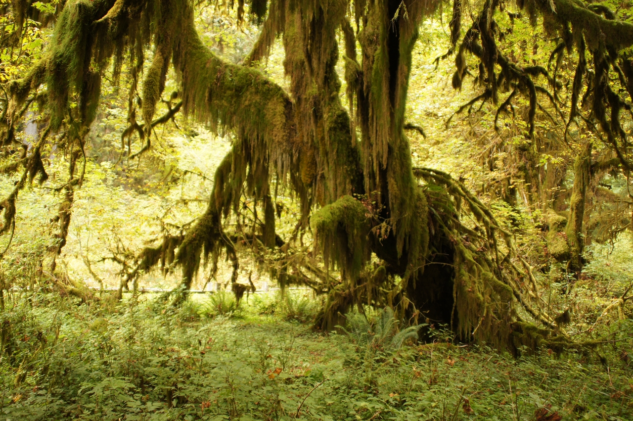 The Hall of Mosses 04