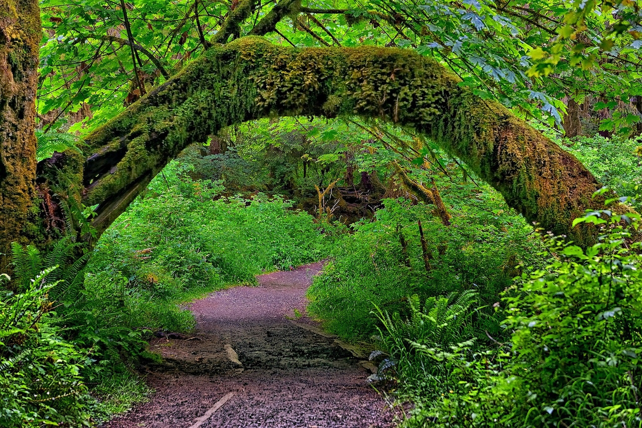 The Hall of Mosses 11