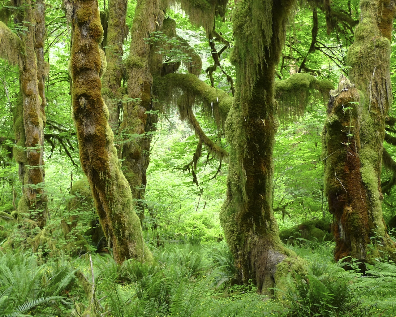 The Hall of Mosses 13