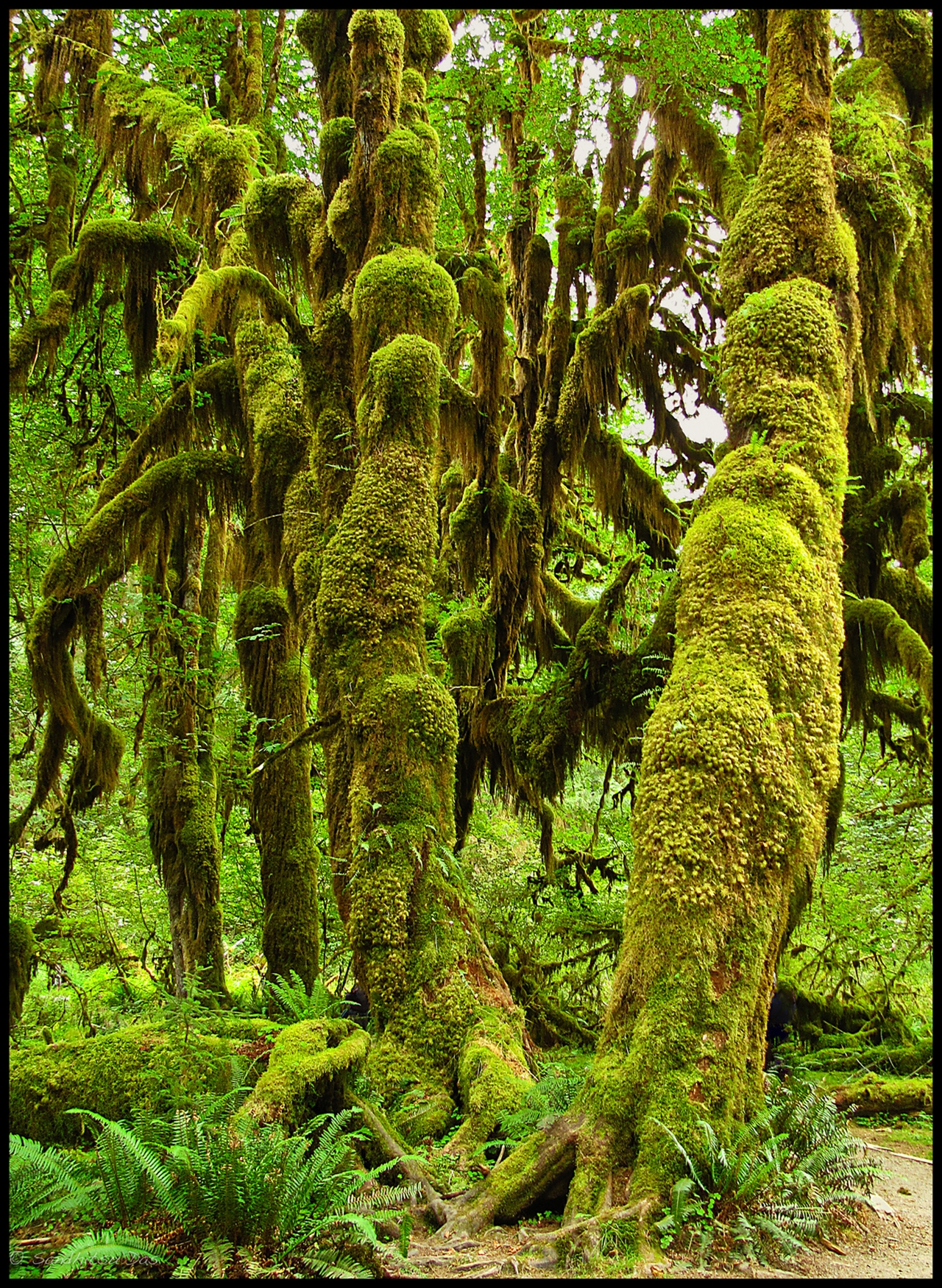 The Hall of Mosses 14