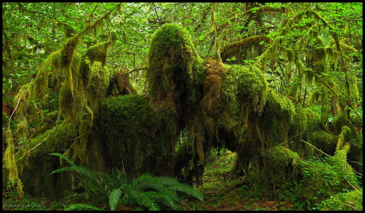 The Hall of Mosses 15