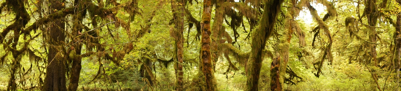 The Hall of Mosses 16