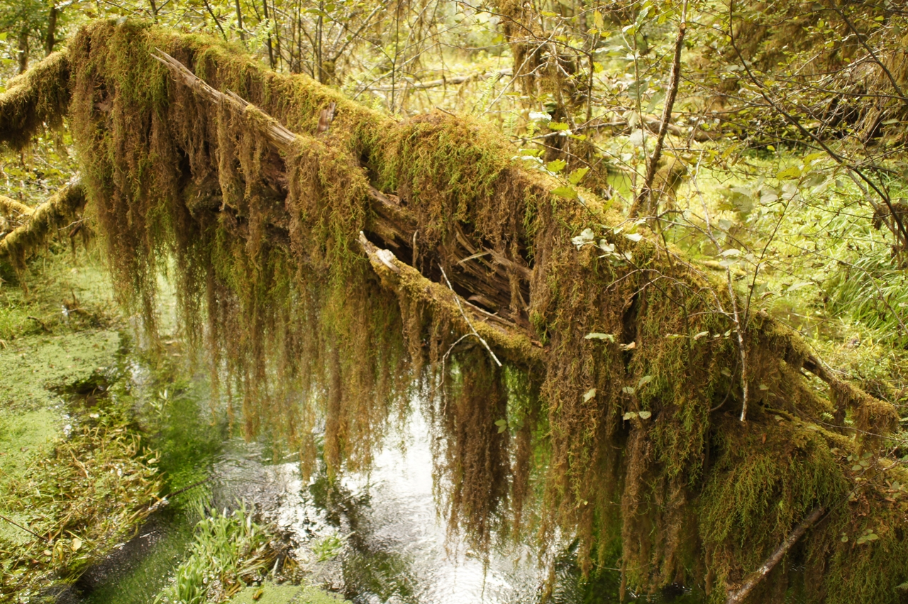 The Hall of Mosses 17
