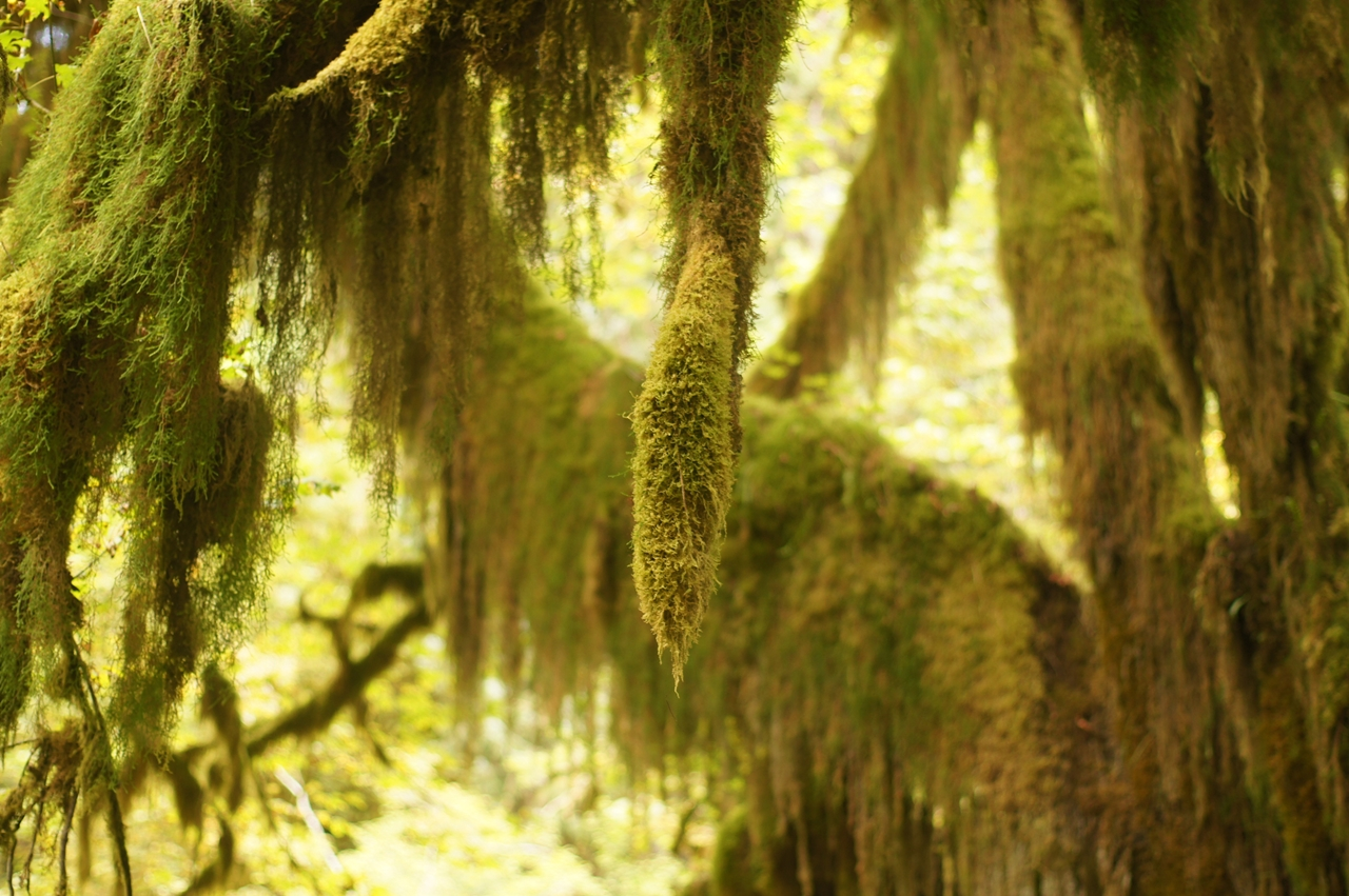 The Hall of Mosses 18
