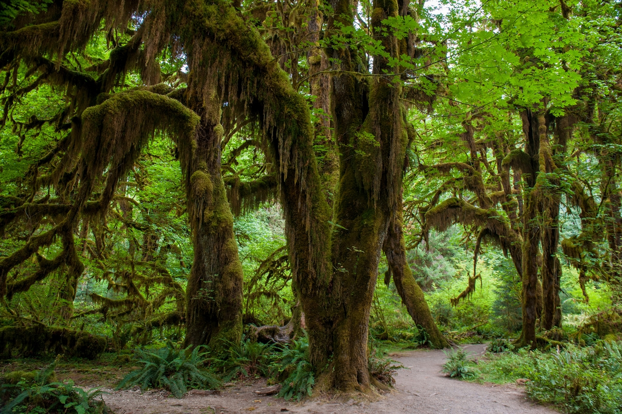 The Hall of Mosses 20