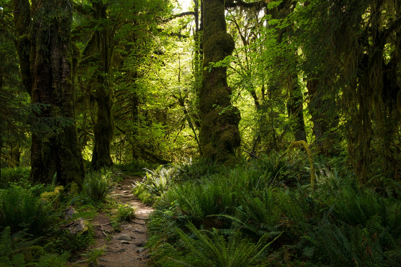 The Hall of Mosses 23