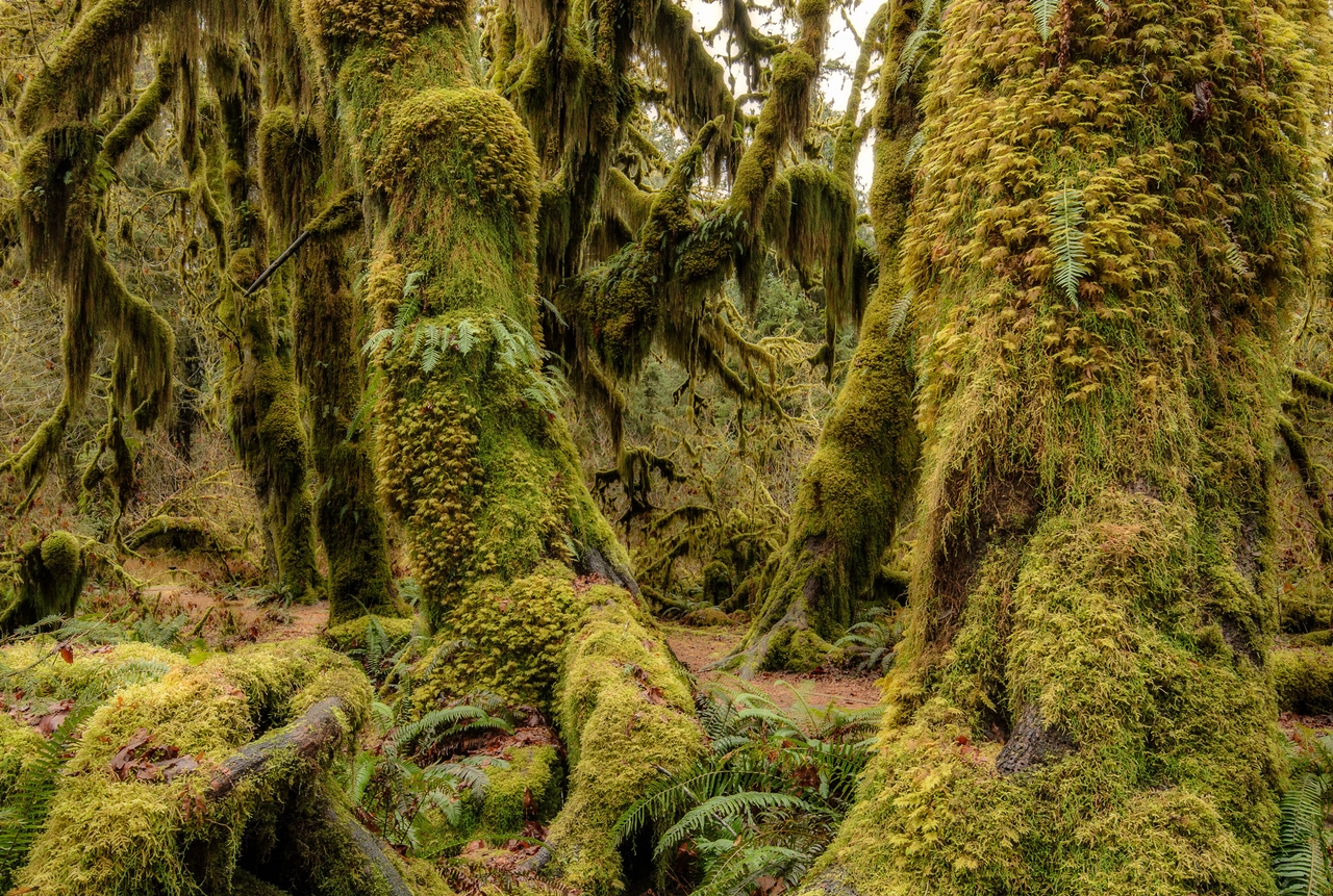 The Hall of Mosses 24