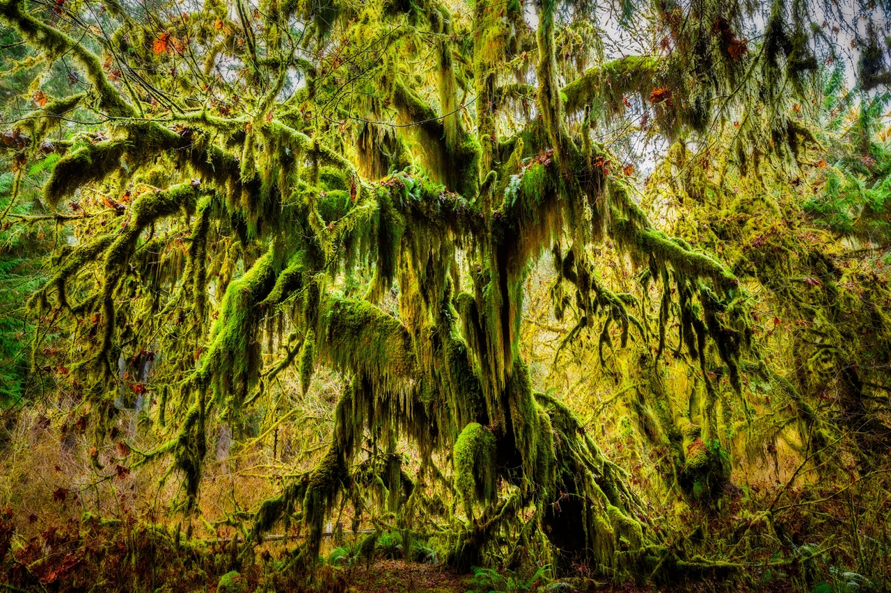 The Hall of Mosses 25