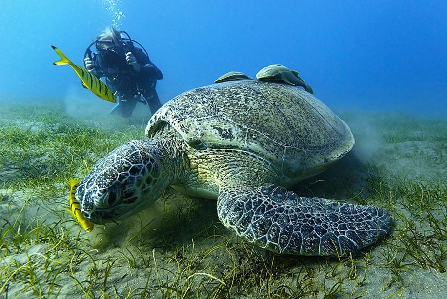 «Подводный мир» фотографа Сергея Баркова