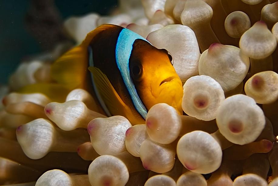 Underwater world photographer Sergey Barkov 03