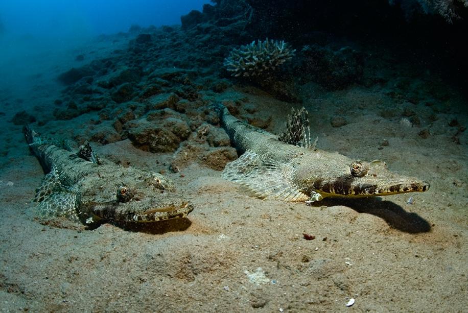 Underwater world photographer Sergey Barkov 05