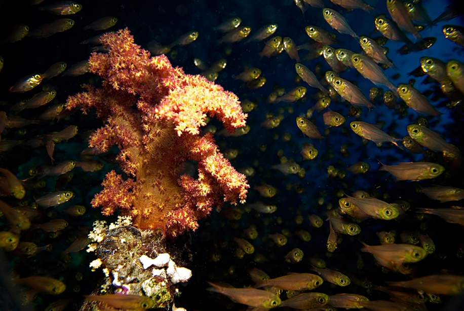 Underwater world photographer Sergey Barkov 09