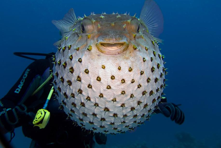 Underwater world photographer Sergey Barkov 10