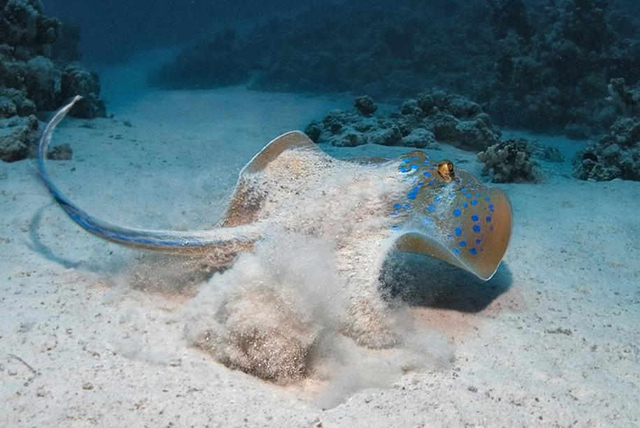 Underwater world photographer Sergey Barkov 11