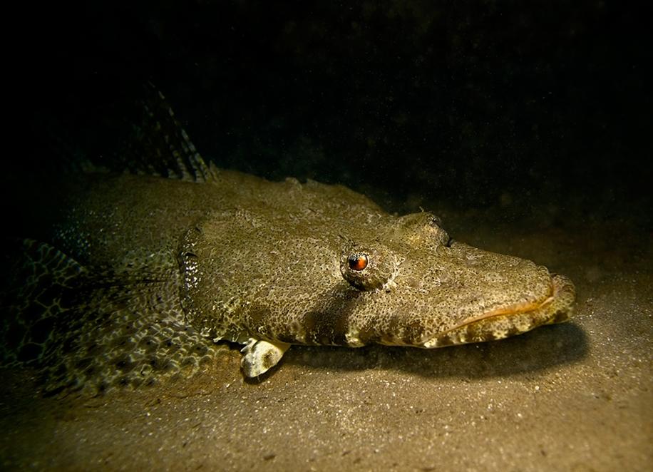 Underwater world photographer Sergey Barkov 13