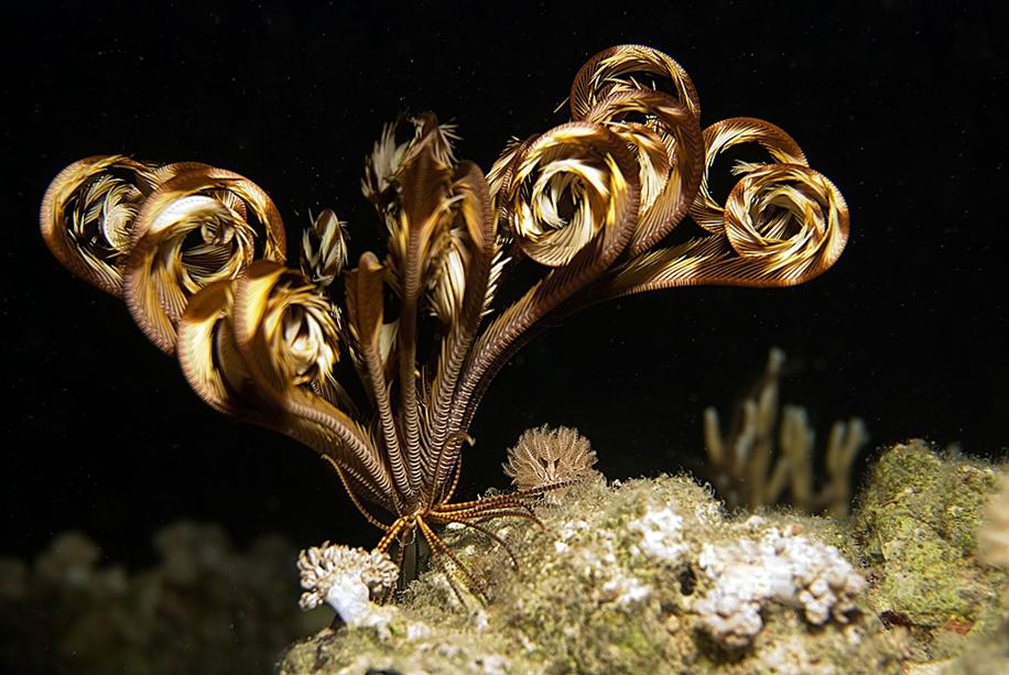 Underwater world photographer Sergey Barkov 17