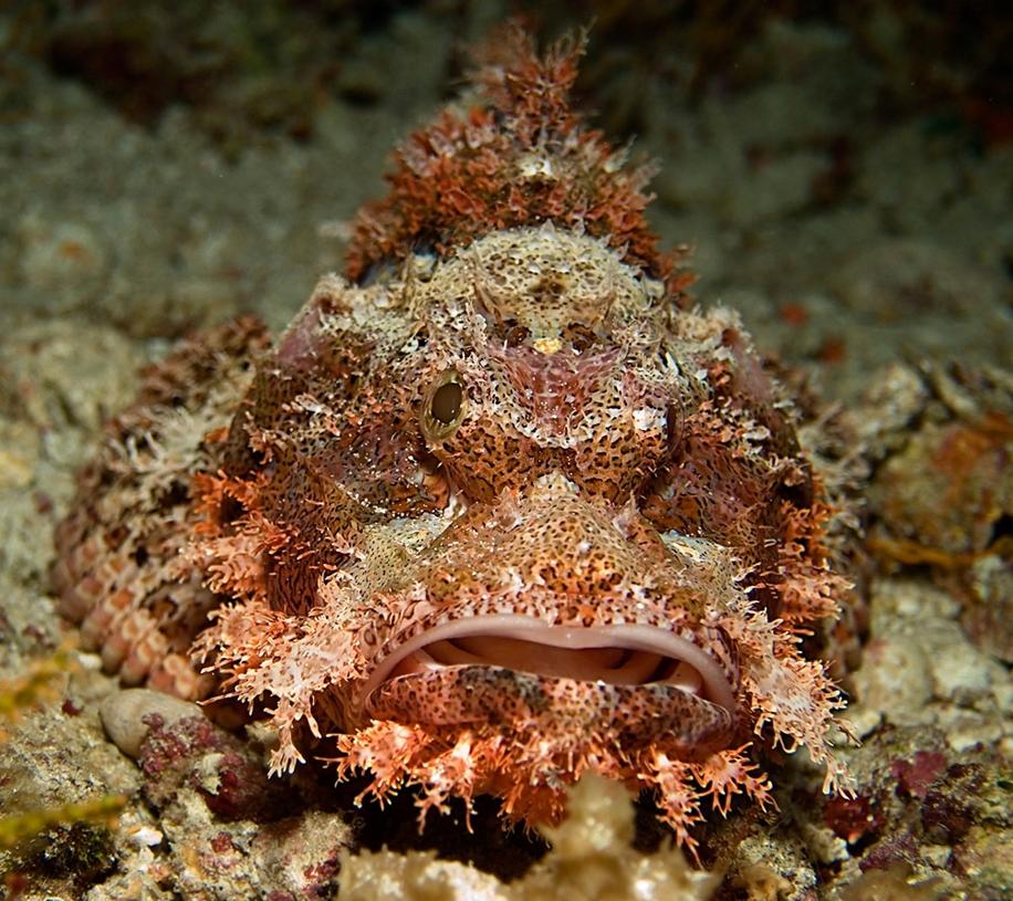Underwater world photographer Sergey Barkov 18