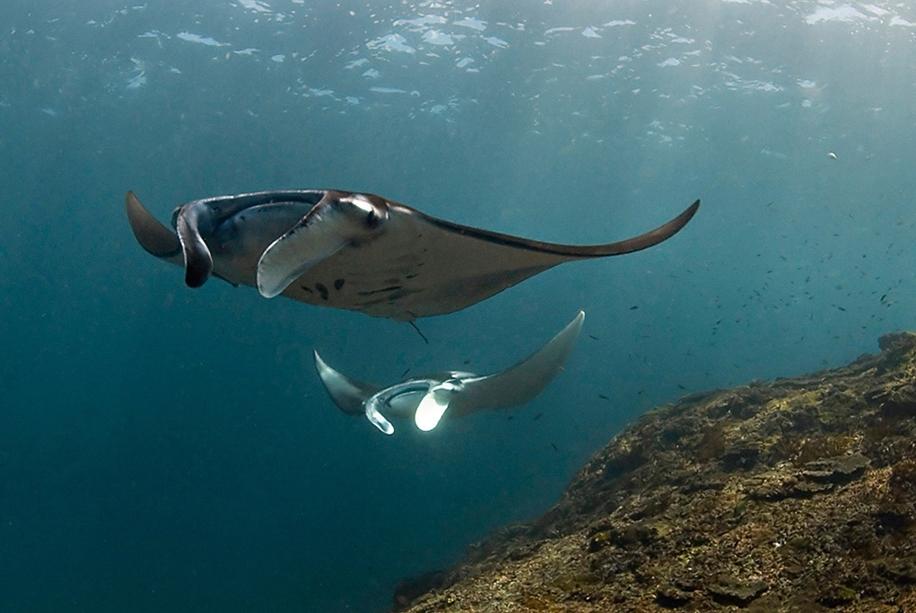 Underwater world photographer Sergey Barkov 19
