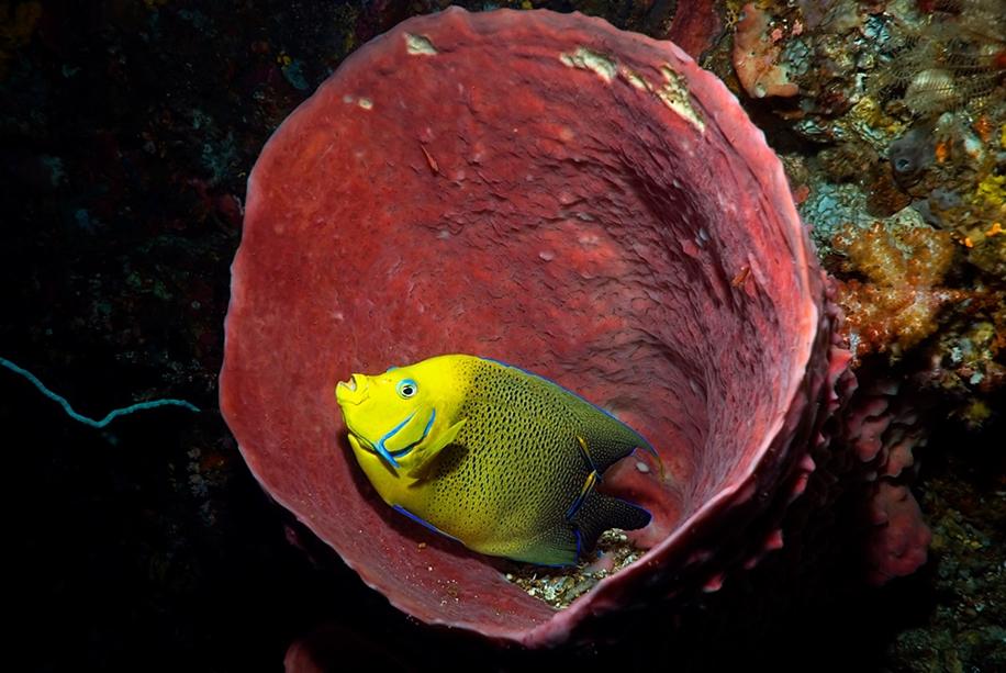 Underwater world photographer Sergey Barkov 20