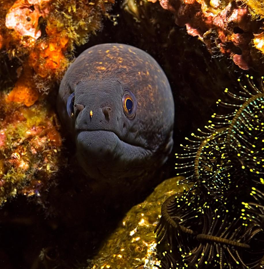 Underwater world photographer Sergey Barkov 24