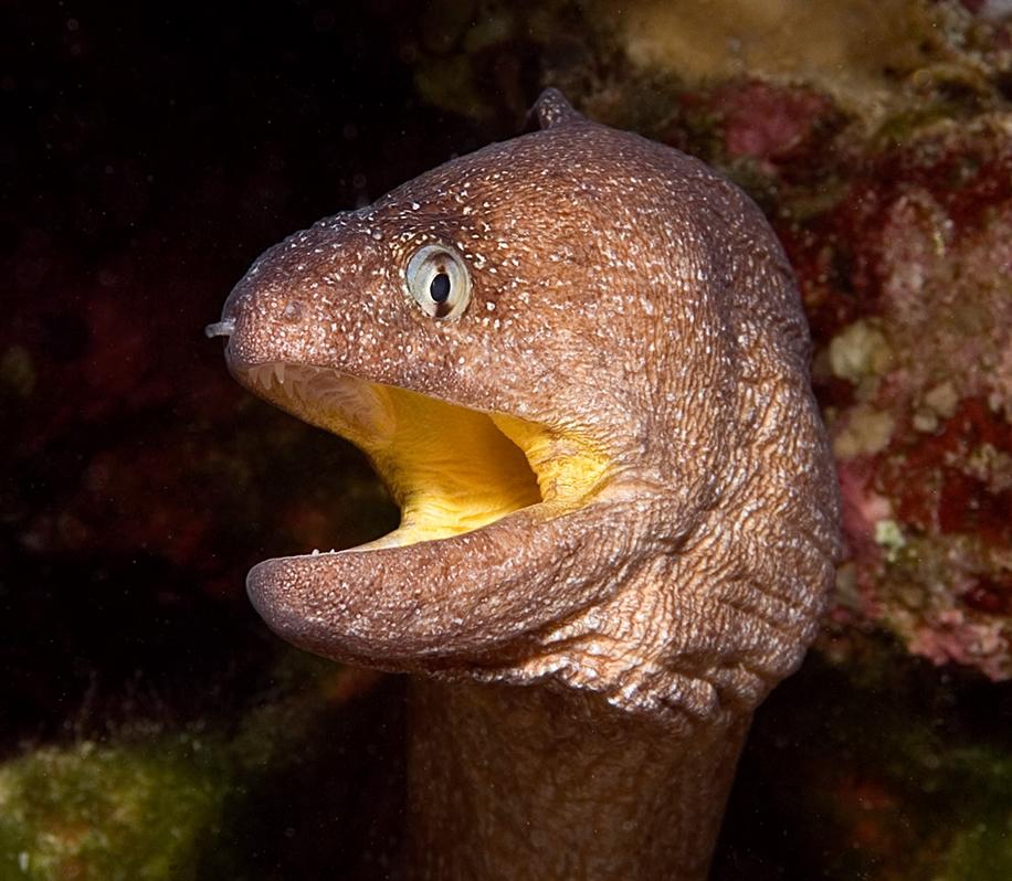 Underwater world photographer Sergey Barkov 26