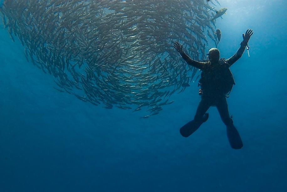 Underwater world photographer Sergey Barkov 28