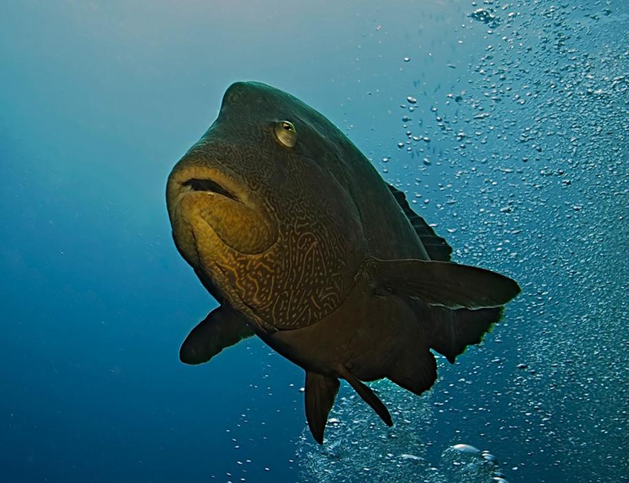 Underwater world photographer Sergey Barkov 29