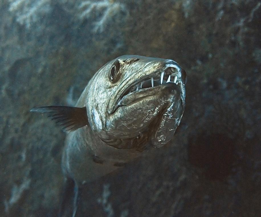Underwater world photographer Sergey Barkov 30
