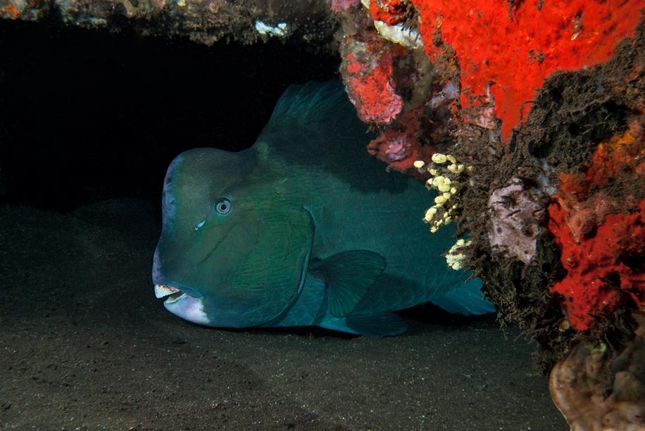 Underwater world photographer Sergey Barkov 33