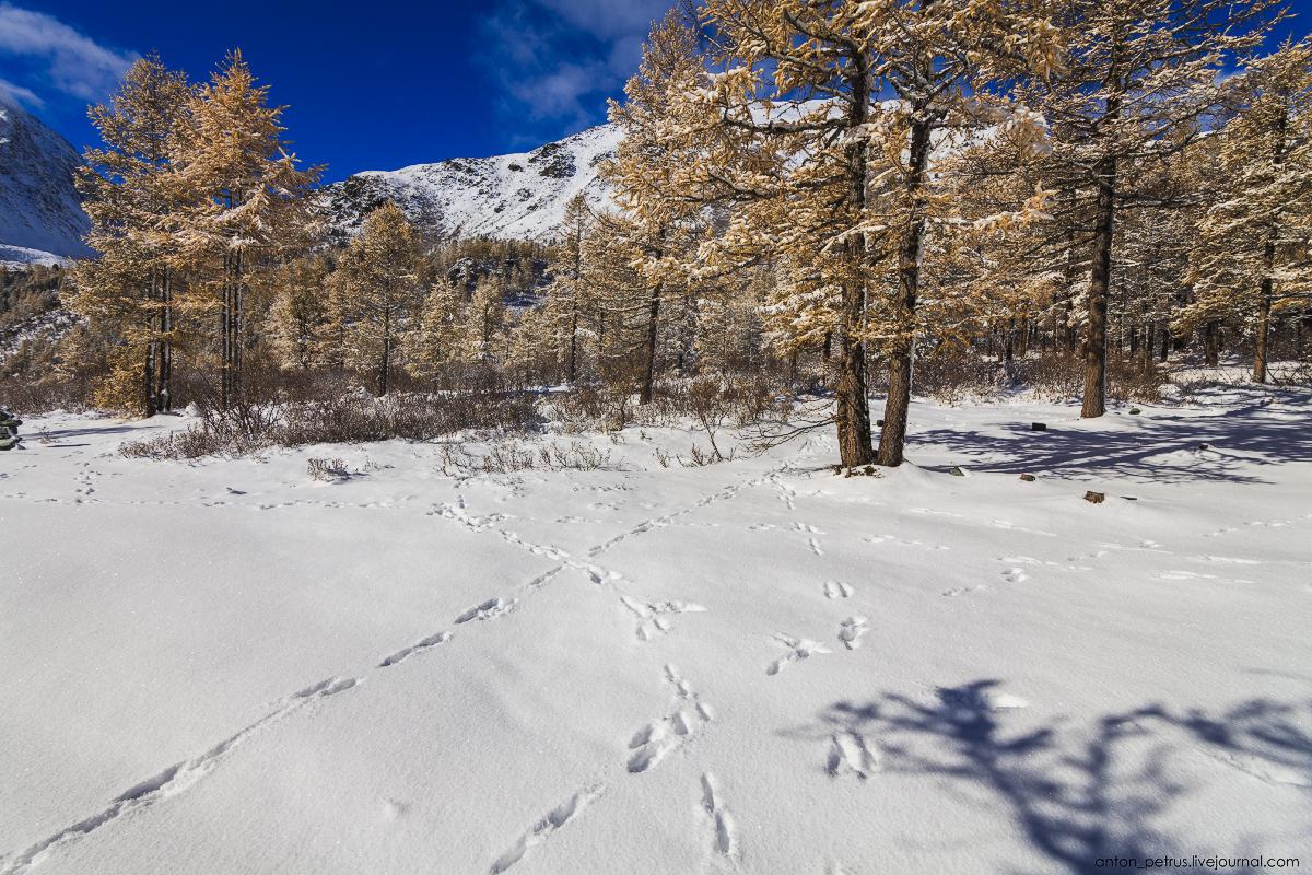 Winter Wonderland in autumn mountains 12