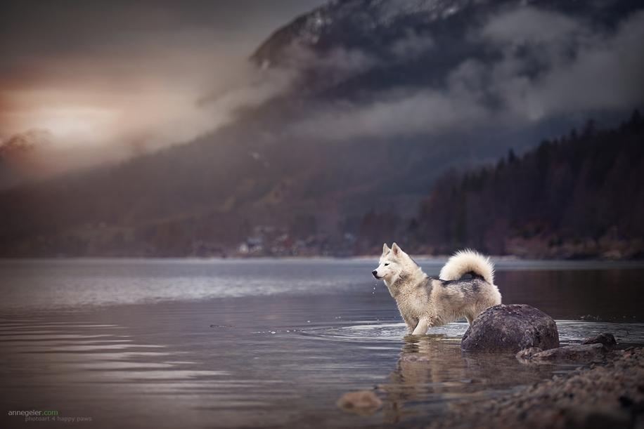 Душещипательные портреты собак от Энн Гайер