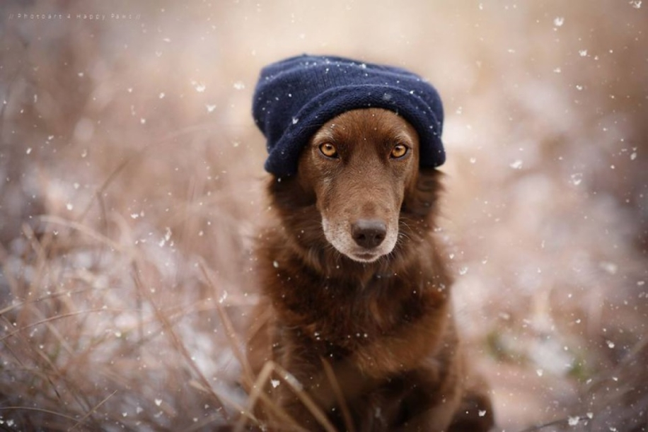 Woman-Creates-Enchanting-Portraits-of-Dogs-in-the-Austrian-Wilderness__10