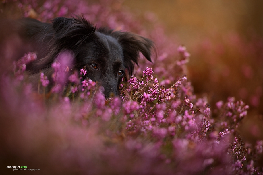 Woman-Creates-Enchanting-Portraits-of-Dogs-in-the-Austrian-Wilderness__12