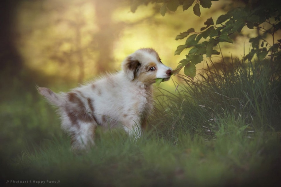 Woman-Creates-Enchanting-Portraits-of-Dogs-in-the-Austrian-Wilderness__13