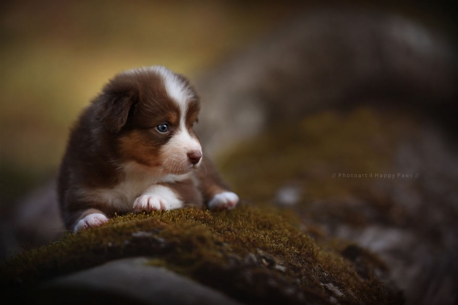 Woman-Creates-Enchanting-Portraits-of-Dogs-in-the-Austrian-Wilderness__16