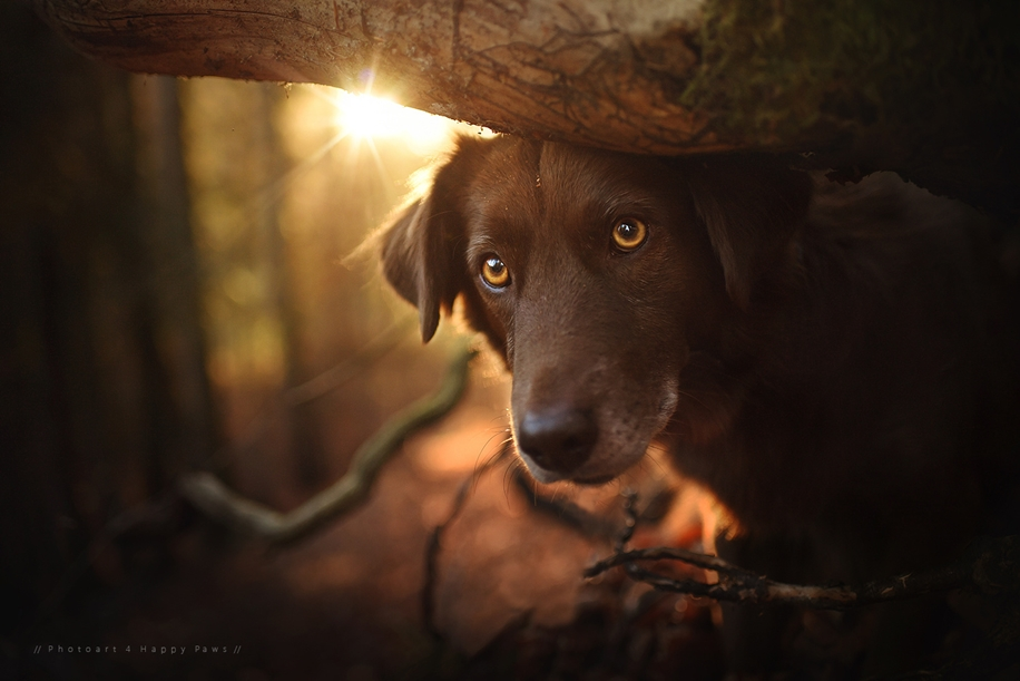 Woman-Creates-Enchanting-Portraits-of-Dogs-in-the-Austrian-Wilderness__17